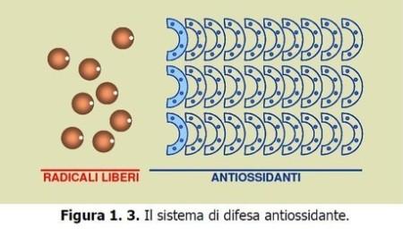 sistema difesa antiossidante Radicali liberi - Misurazione stress ossidativo - Skin Center Pescara